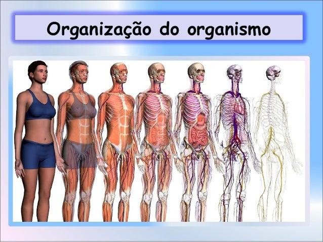 Organização do organismo