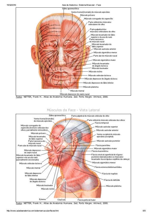 Aula de anatomia sistema muscular - face