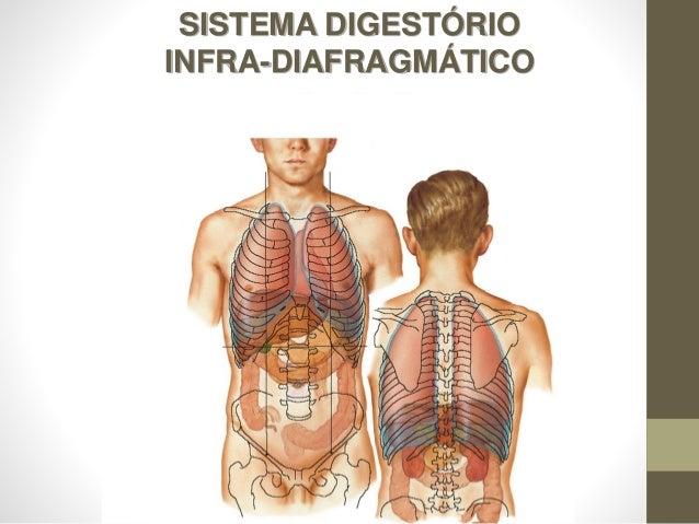 SISTEMA DIGESTÓRIO INFRA-DIAFRAGMÁTICO