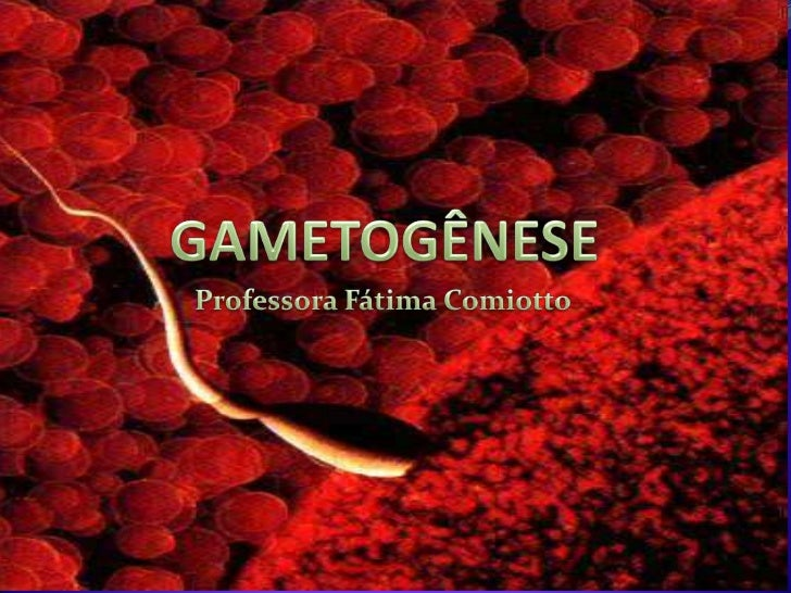 GAMETOGÊNESE<br />Professora Fátima Comiotto<br />