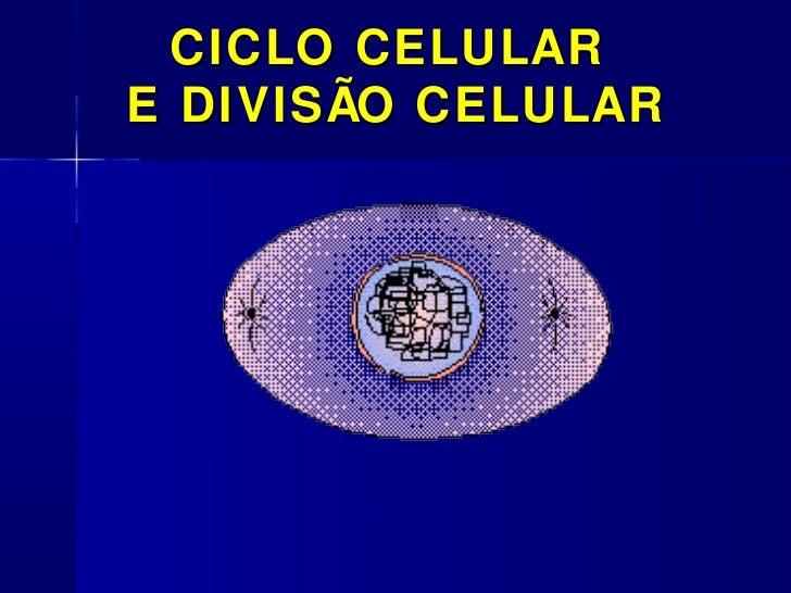 CICLO CELULARE DIVISÃO CELULAR