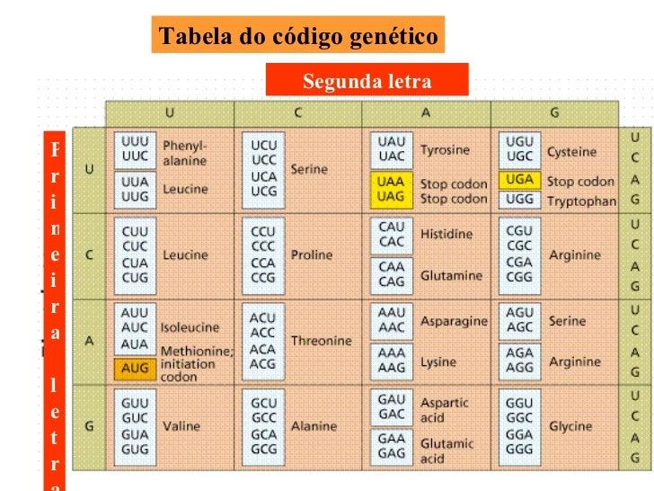 Tabela do código genético Segunda letra Primeira letra