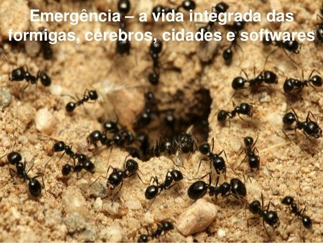 Emergência – a vida integrada das formigas, cérebros, cidades e softwares