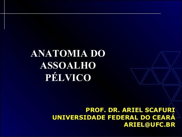 ANATOMIA DOASSOALHOPÉLVICOPROF. DR. ARIEL SCAFURIPROF. DR. ARIEL SCAFURIUNIVERSIDADE FEDERAL DO CEARÁUNIVERSIDADE FEDERAL ...