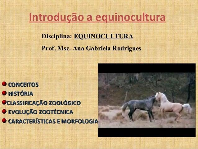Introdução a equinocultura  Disciplina: EEQQUUIINNOOCCUULLTTUURRAA  Prof. Msc. Ana Gabriela Rodrigues  CCOONNCCEEIITTOOSS ...