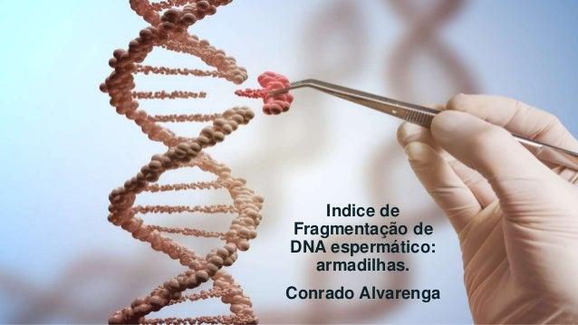 Indice de Fragmentação de DNA espermático: armadilhas. Conrado Alvarenga