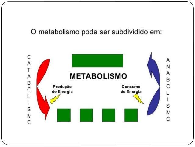 Organismos: possuem equipamento enzimático completo:  Degradação(catabolismo)  Síntese( anabolismo)  Não ocorrem simult...