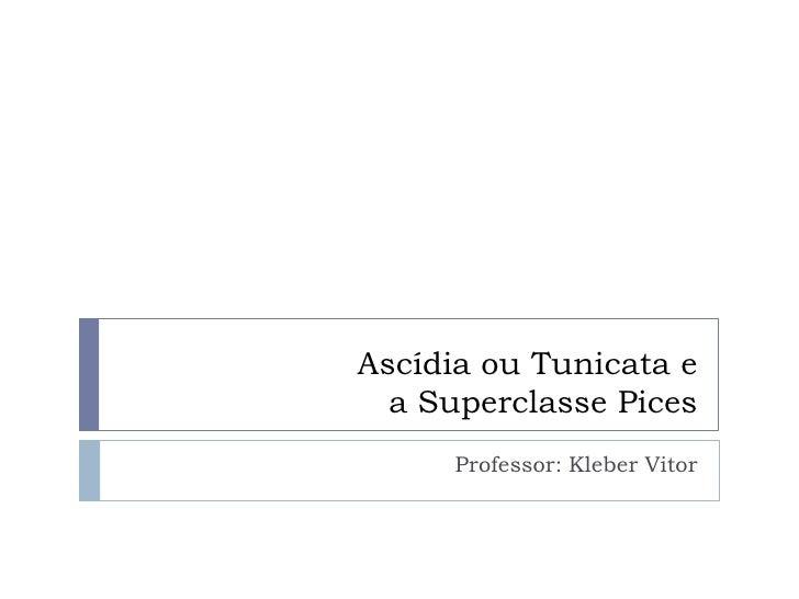Ascídia ou Tunicata e a Superclasse Pices<br />Professor: Kleber Vitor<br />
