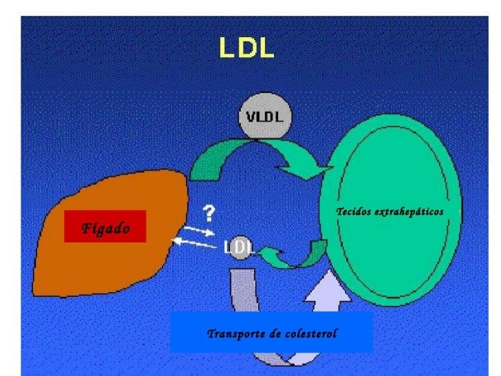 Tecidos extrahepáticosFígado         Transporte de colesterol