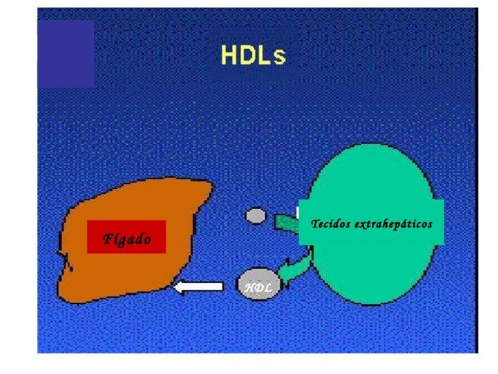 Tecidos extrahepáticosFígado         HDL
