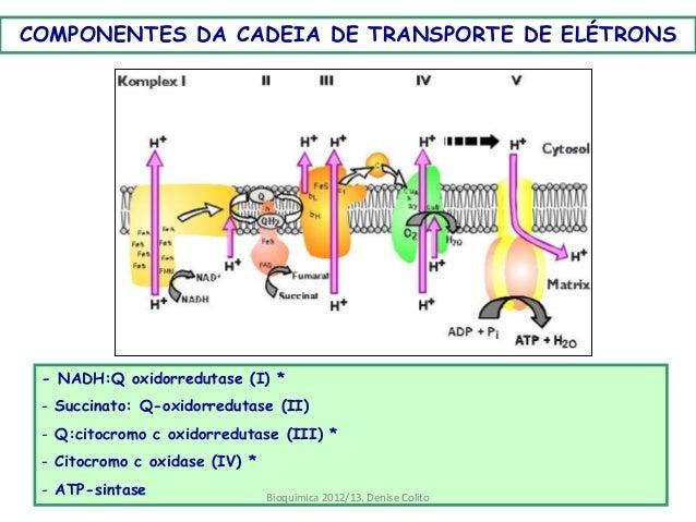 localização celular da cadeia de transporte de eletrons
