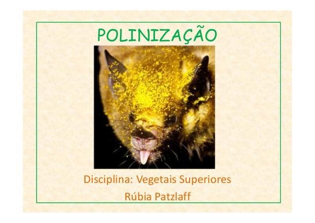 POLINIZAÇÃODisciplina: Vegetais SuperioresRúbia Patzlaff