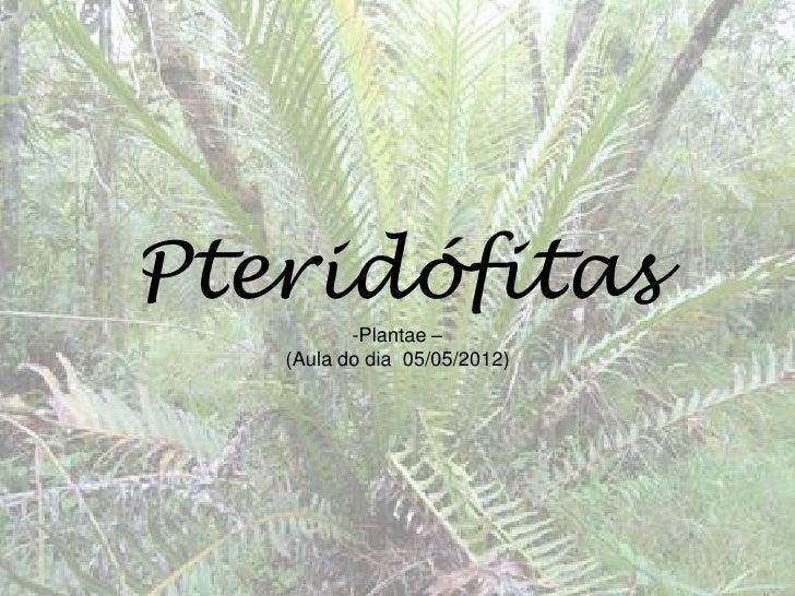Pteridófitas          -Plantae –   (Aula do dia 05/05/2012)