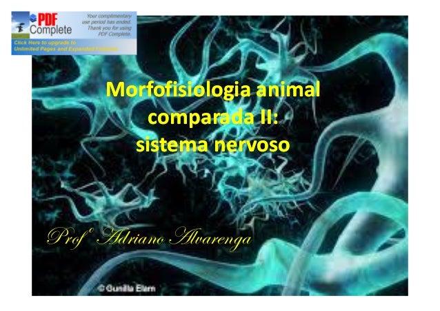 Morfofisiologia animal comparada II: sistema nervoso  Profº Adriano Alvarenga