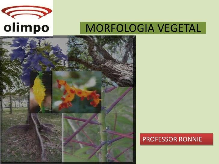 MORFOLOGIA VEGETAL<br />PROFESSOR RONNIE<br />