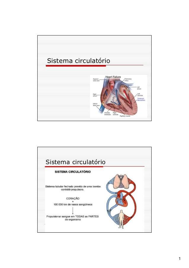 1 Sistema circulatório Sistema circulatório
