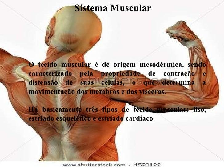 O tecido muscular é de origem mesodérmica, sendo caracterizado pela propriedade de contração e distensão de suas células, ...