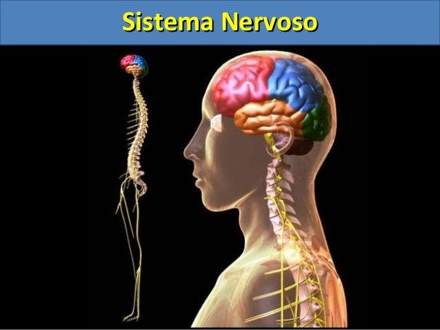 Sistema NervosoSistema Nervoso