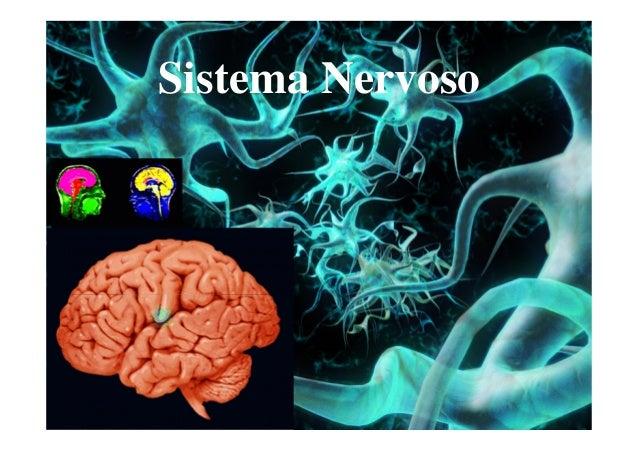 Sistema Nervoso  Sistema Nervoso