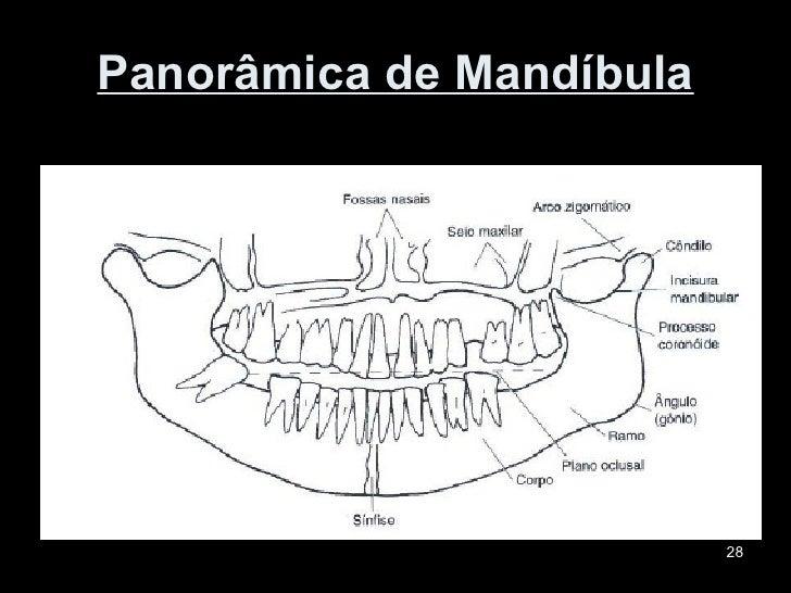 Lujo X Panorámica Anatomía Rayos Motivo - Anatomía de Las ...