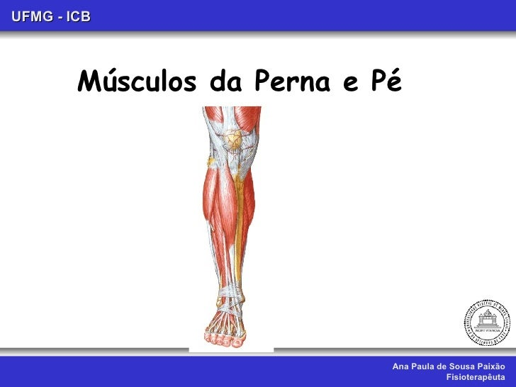 Aula xii. musculos da perna e pé