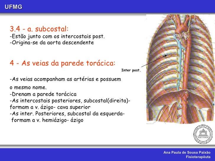 Aula x ii. vascularização da cabeça, pesco4o e tronco.ufmg