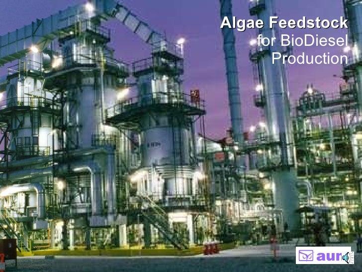 Algae Feedstock   for BioDiesel Production