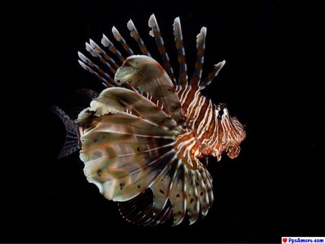 Australia barriera-corallina