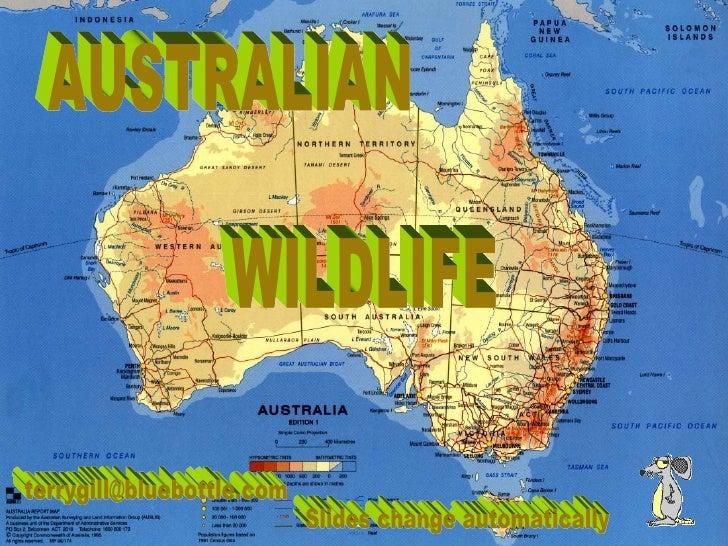 AUSTRALIAN WILDLIFE [email_address] Slides change automatically