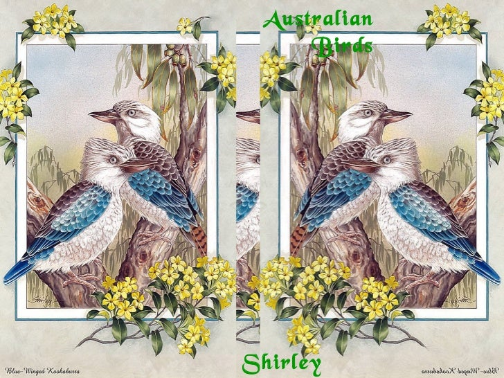 Australian     BirdsShirley