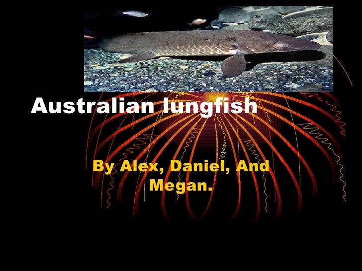 Australian lungfish  By Alex, Daniel, And Megan.