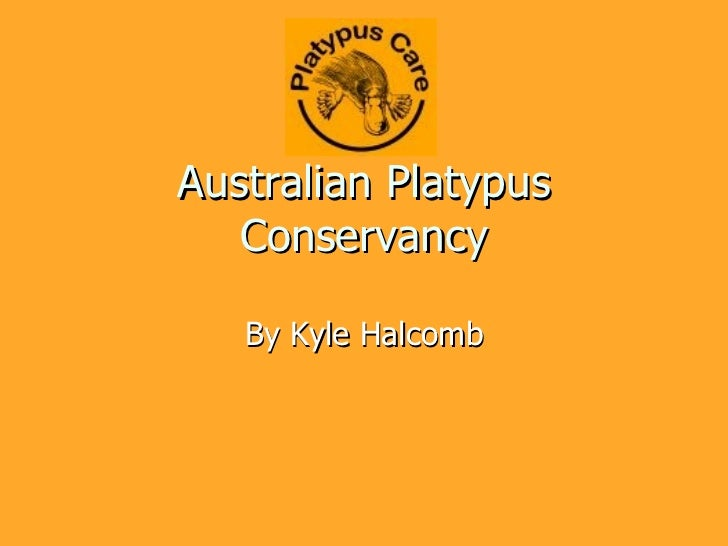 Australian Platypus Conservancy By Kyle Halcomb