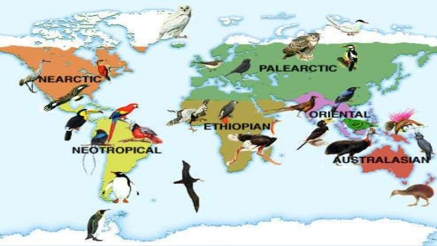 Introduction  Zoogeographical realms : Based on the faunal peculiarity & the pattern of animal distribution , the earth s...