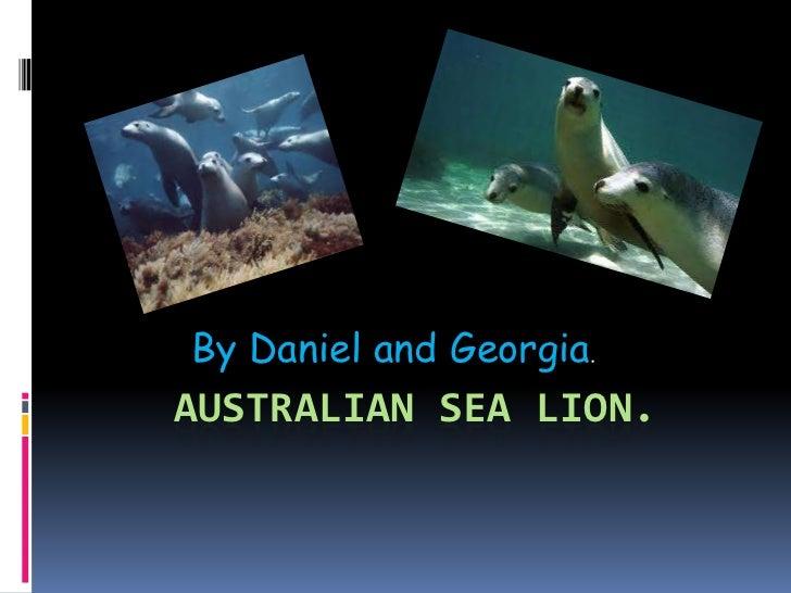 Australian Sea Lion.<br />By Daniel and Georgia.<br />