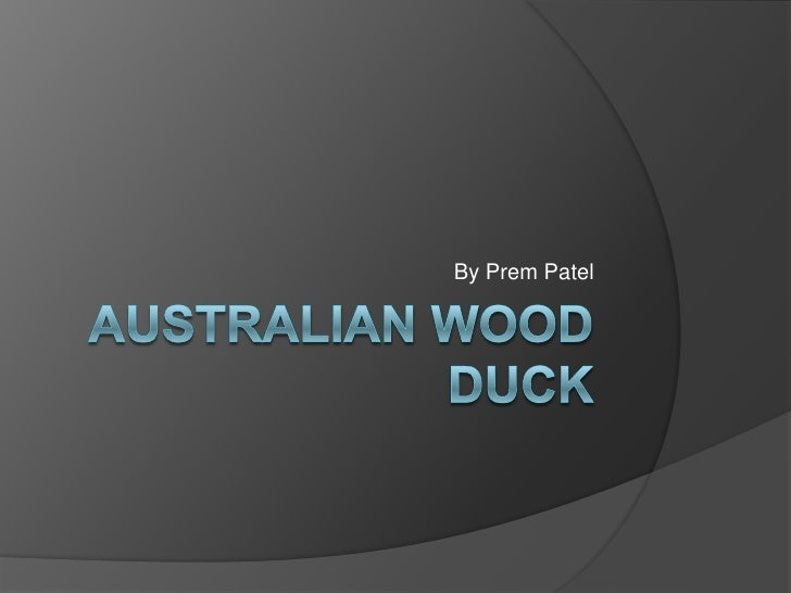Australian Wood Duck<br />By Prem Patel<br />