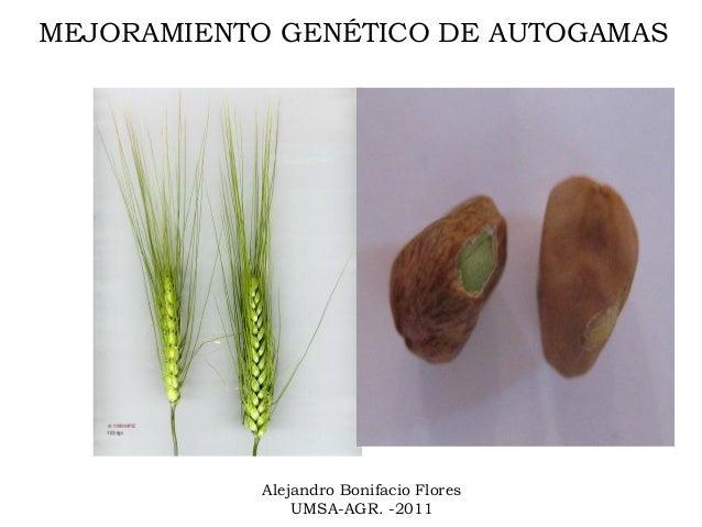 MEJORAMIENTO GENÉTICO DE AUTOGAMAS            Alejandro Bonifacio Flores                UMSA-AGR. -2011