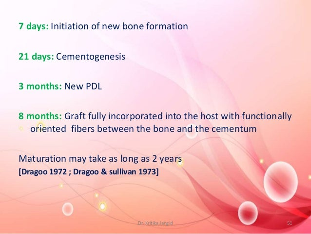7 days: Initiation of new bone formation 21 days: Cementogenesis 3 months: New PDL 8 months: Graft fully incorporated into...