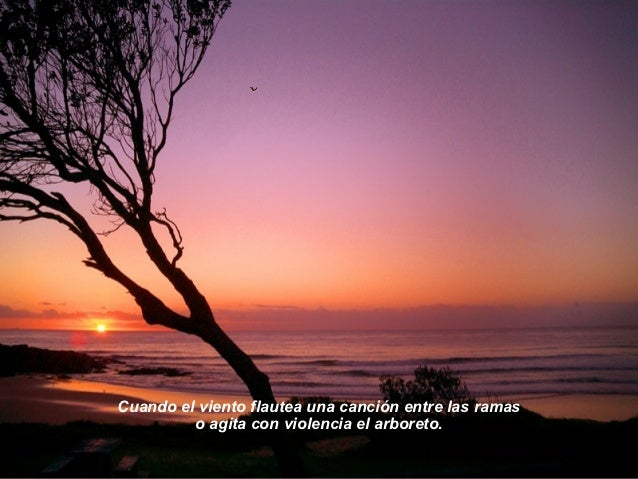 Cuando el sol se pinta de oro           y todo se llena de luz por donde se desborda.02.05.11