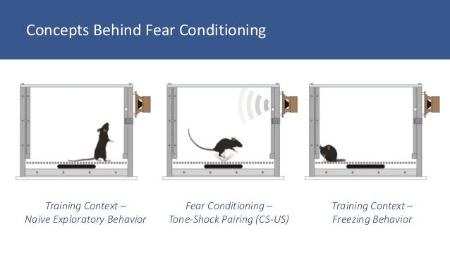 concept analysis of fear Read this essay on my fear analysis come browse our large digital warehouse of free sample essays get the knowledge you need in order to pass your classes and more.