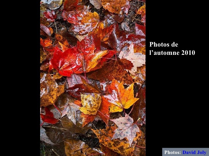 Photos:  David Joly Photos de l'automne 2010