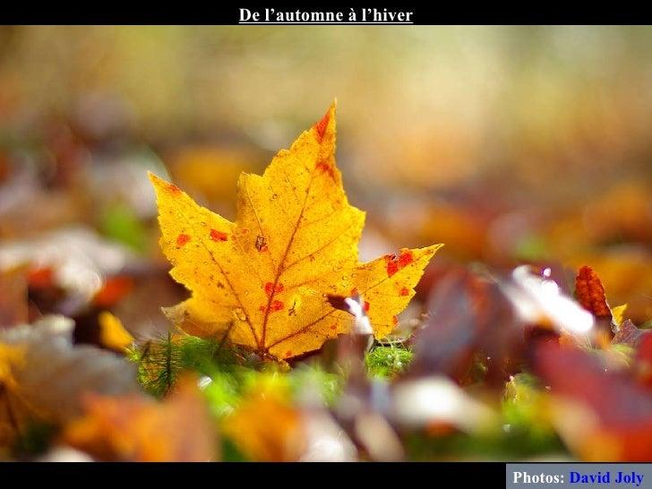 Photos:  David Joly De l'automne à l'hiver