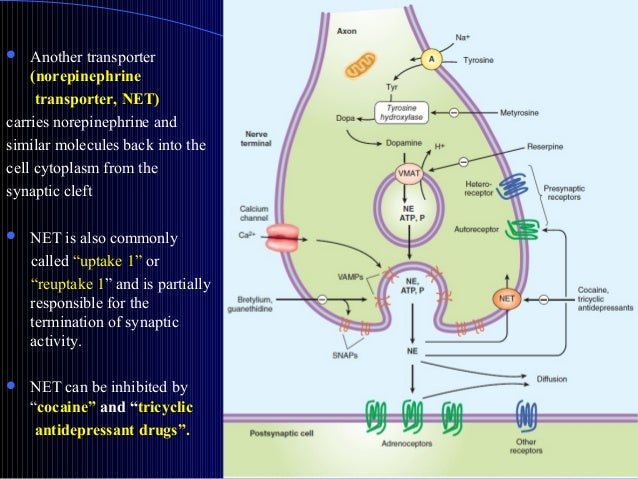 monoamine transporter as a drug action essay Start studying transporters, receptors, and enzymes as targets of psychopharmacological drug action learn vocabulary, terms, and more with flashcards, games, and.