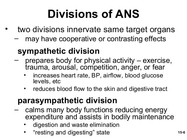 what is parasympathetic division