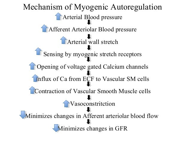 mechanisms of blood flow in the The rate and distribution of blood flow through the circulatory system is variable and what is blood pressure a number of mechanisms are used which help to.