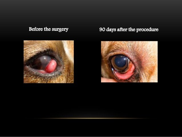 CONCLUSIONS  • The prolapsed third eyelid gland have a very low function  because of the inflammation  • When you replace ...