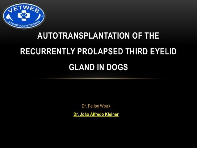 """PROLAPSE OF THE GLAND  • """"Cherry-eye""""  • Most common primary disorder of  the nictitating membrane  • Generally before 2 y..."""