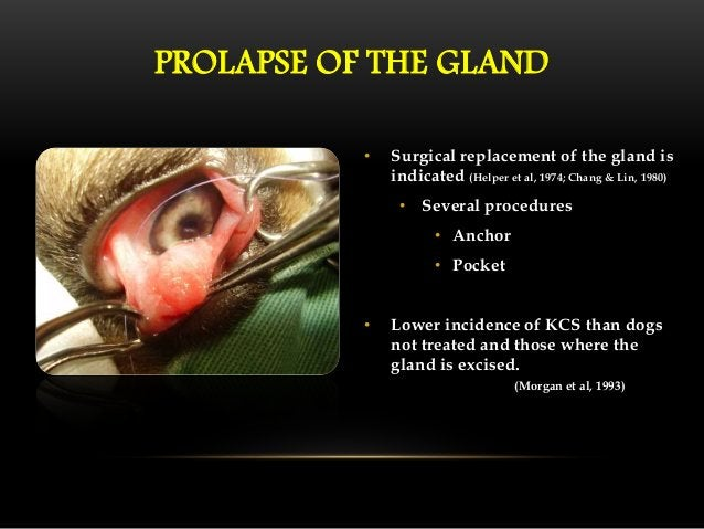 • Recurrence of third eyelid gland  prolapse after surgery occurs in  5 - 10 % of cases.  • Re-operation is not always  po...