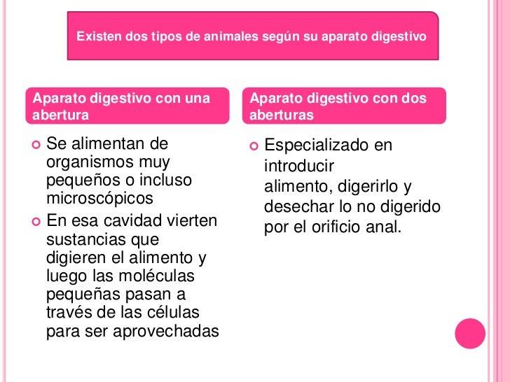 Nutricion Autotrofa Y Heterotrofa