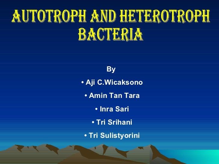 autotroph  u0026 heterotroph bacteria