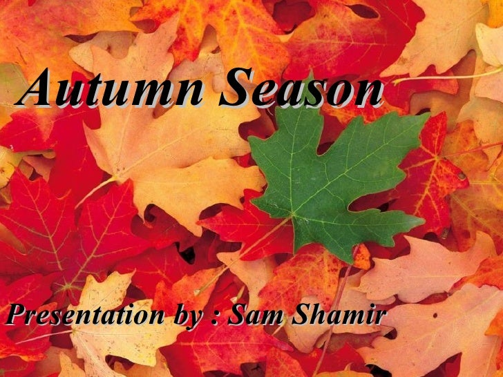 Autumn Season Presentation by : Sam Shamir